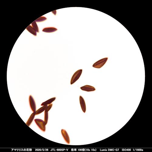 200526_amaririsu100x