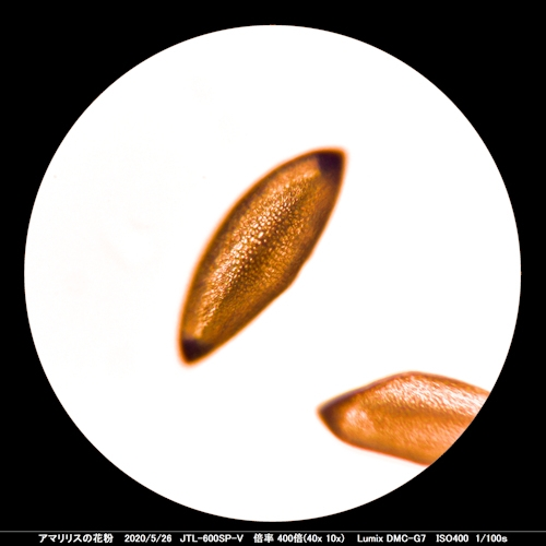 200526_amaririsu400x
